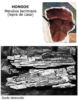 La foto del hongo de las uñas en los pies la fase inicial de la foto como se ve